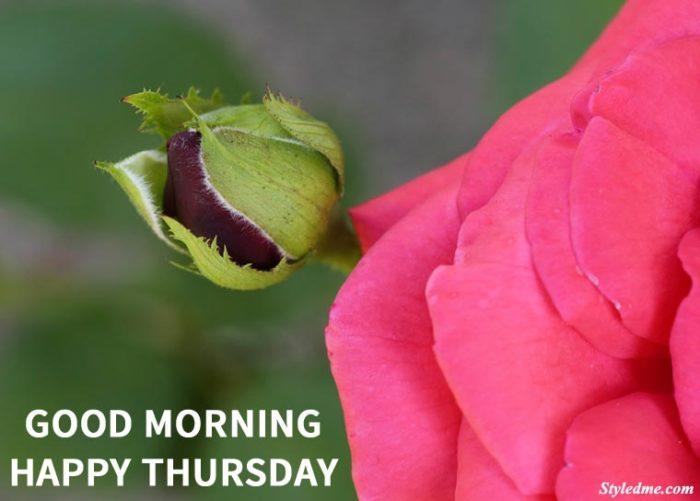 happy thursday flowers