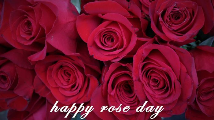 Happy rose day 2020 wallpaper