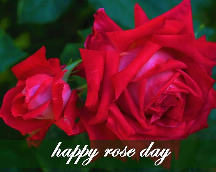 Rose day 2020 images