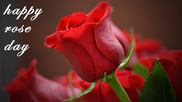 rose day wallpaper HD background