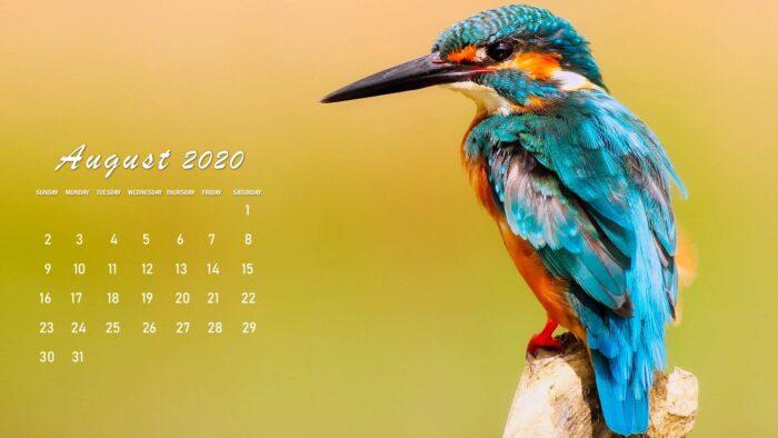 august 2020 calendar wallpaper background desktop laptop bird