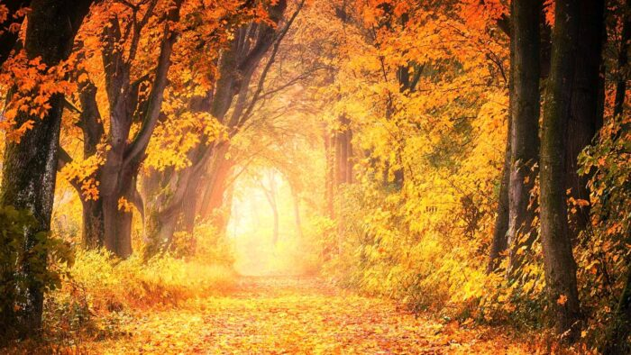 fall autumn theme leaves foliage zoom virtual backgrounds