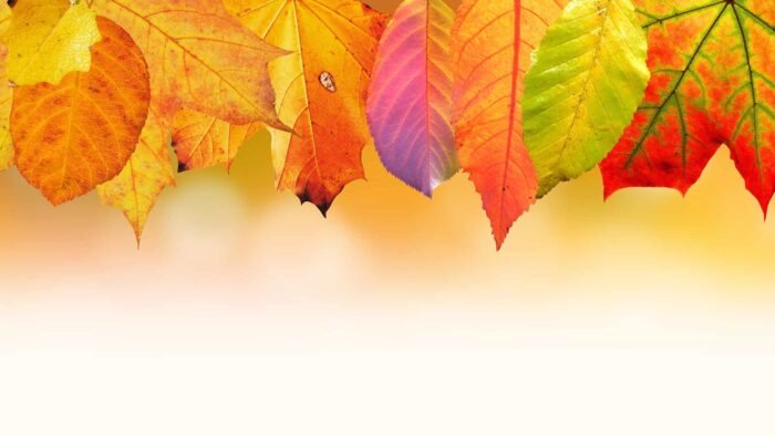 Fall Zoom background
