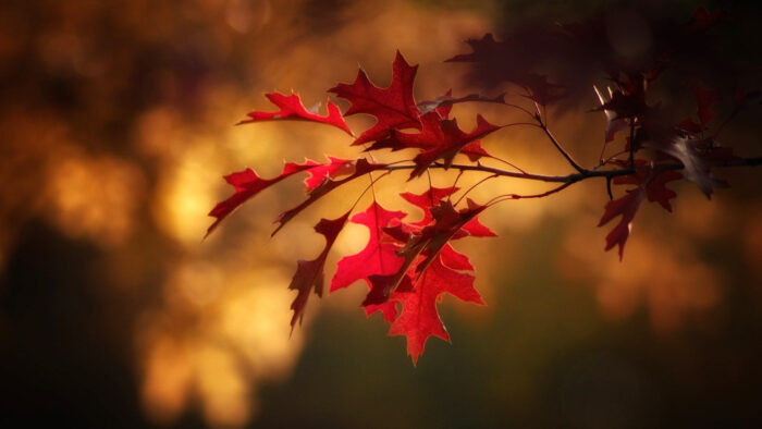 fall background 2020 desktop wallpaper nature pictures