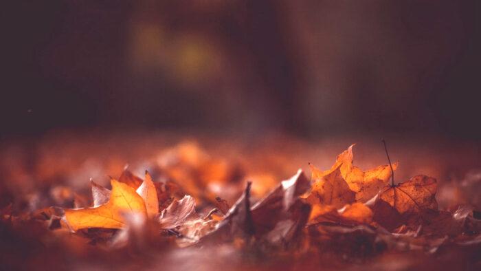 fall background desktop wallpaper