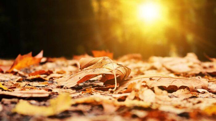 fall background desktop wallpaper beautiful images