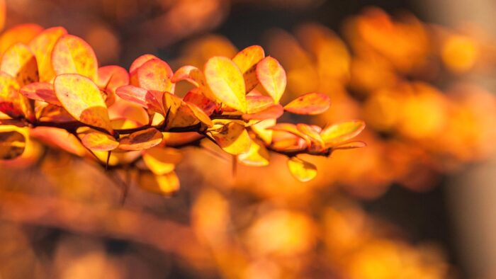 fall background desktop wallpaper leaves for computer high resolution