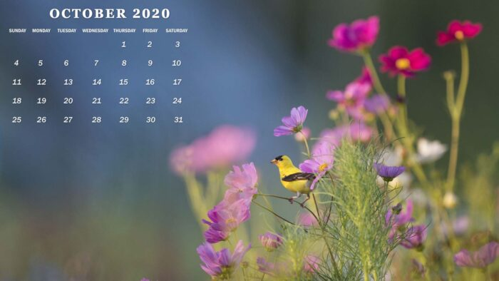 october 2020 free desktop wallpaper background