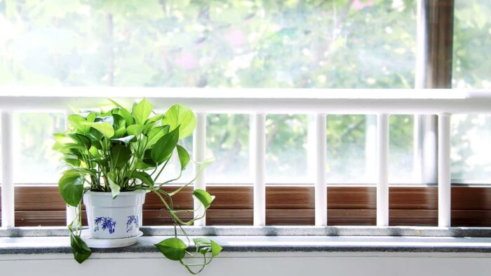window office with green plant leaf teams background
