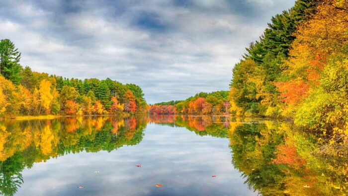 autumn zoom background