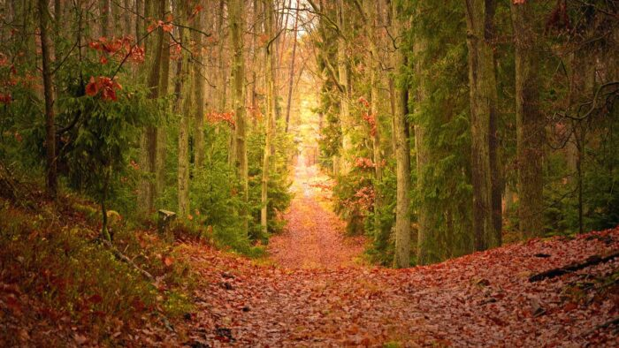 fall themed autumn zoom virtual backgrounds free forest trees background
