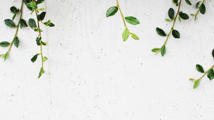 minimalist zoom virtual backgrounds wallpaper background