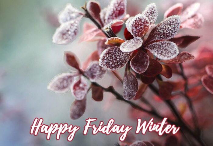 happy friday winter images