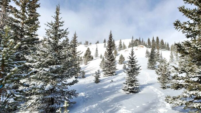 winter park colorado zoom background snowy trees themed background
