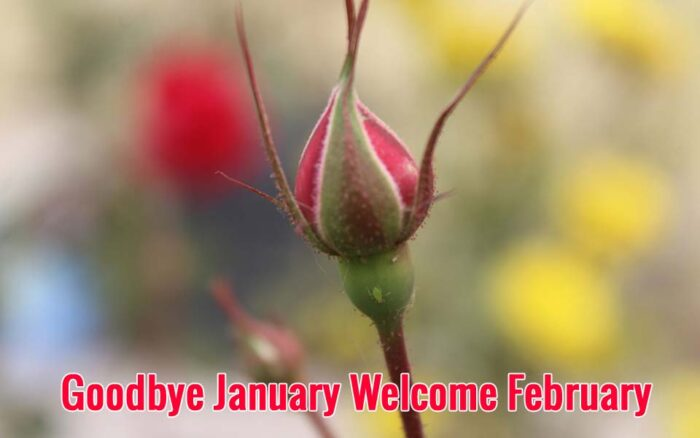 goodbye january welcome february images 2021