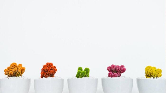 minimalist white wall plain zoom virtual background with plant