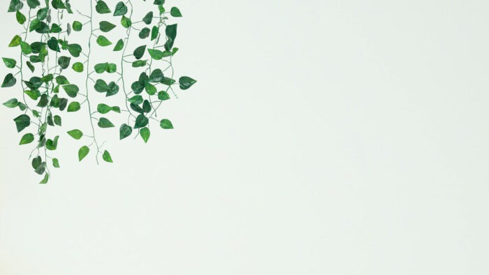 simple wall minimalist virtual meeting image with plant