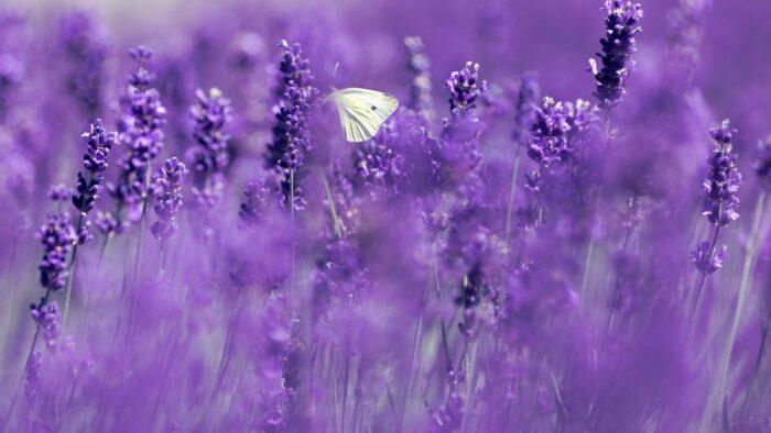 purple zoom background