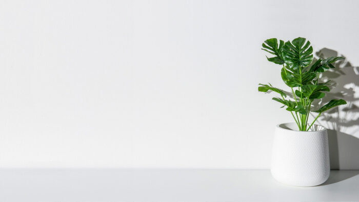 white wall with green plant minimalist clean background