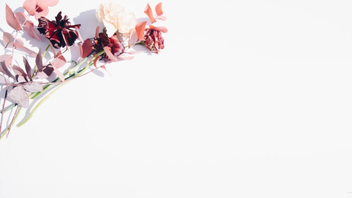 white zoom virtual backgrounds simple room with plants background