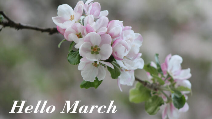 hello march wallpaper spring desktop laptop backgrounds