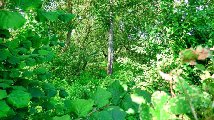 nature background realistic forest pictures virtual backgrounds for zoom meetings