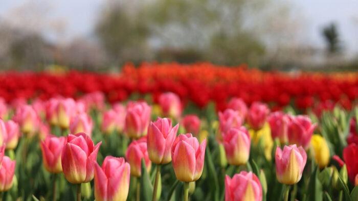 springtime zoom background