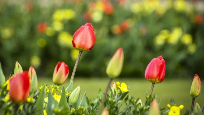 springtime zoom virtual backgrounds spring break time flowers garden background
