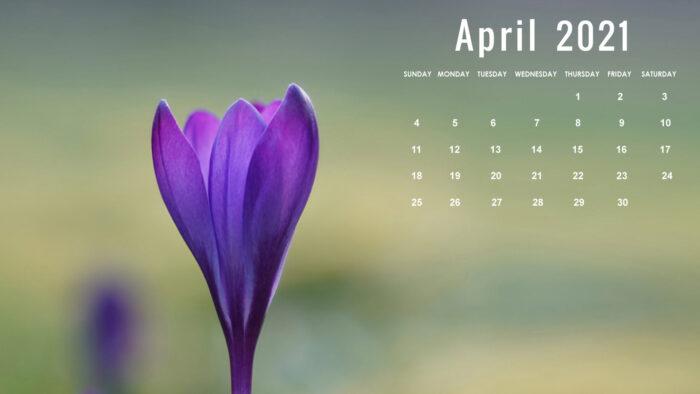 april 2021 wallpaper free background desktop laptop computer
