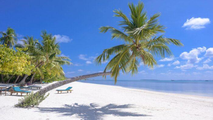 beach teams background seashore scene themed images