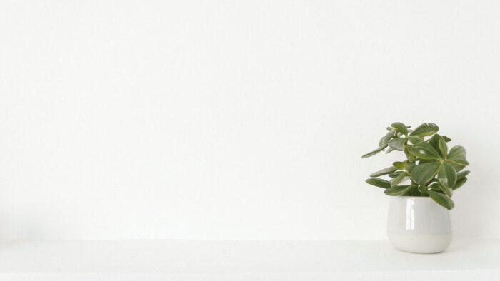 minimal zoom virtual backgrounds office wall plain white room with plants background