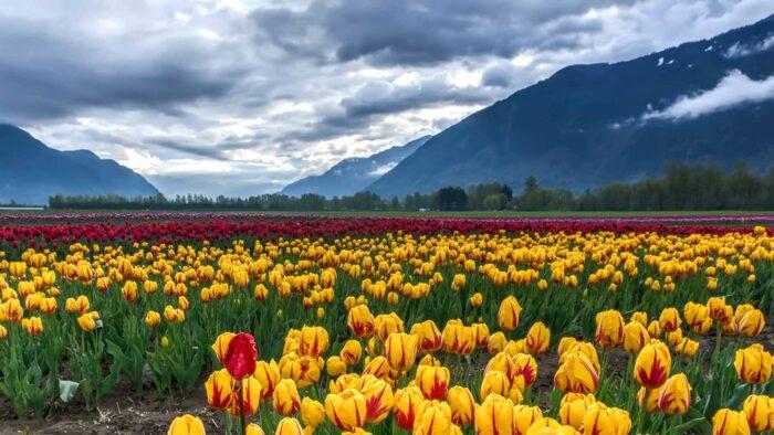 mountain spring desktop wallpaper 1080p high resolution springtime meadow bloom