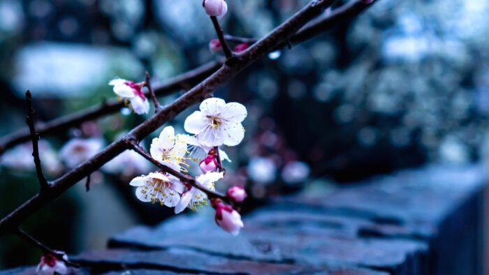 spring flowers background white wild bloom