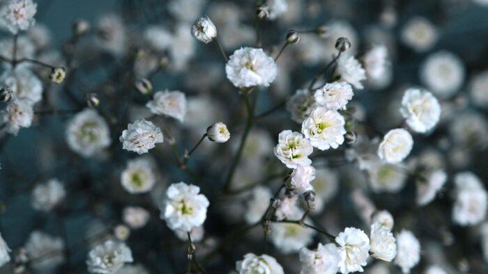 spring flowers background desktop wallpaper white garden wild bloom high resolution