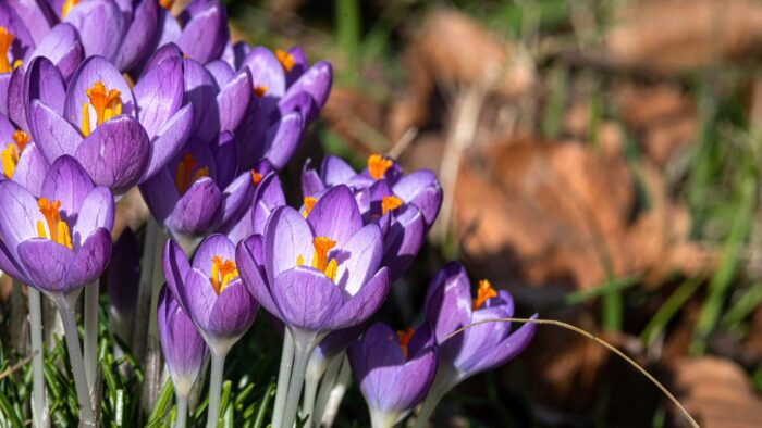 springtime wallpaper 1080p high resolution 1920x1080 HD images