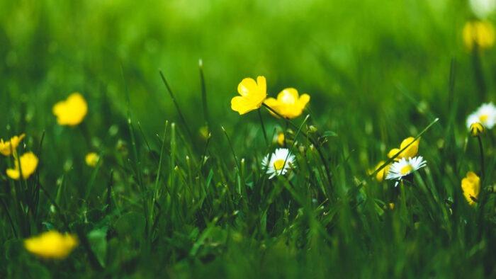 springtime wallpaper desktop background HD images