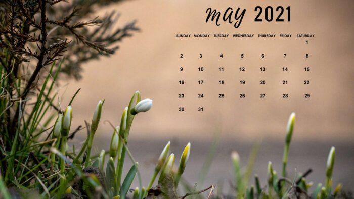 free may 2021 calendar wallpaper background desktop laptop computer
