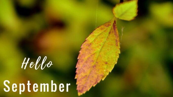 autumn september background wallpaper images