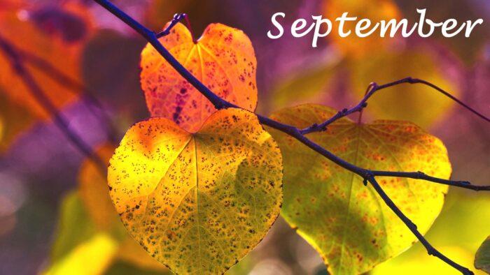 autumn september images background