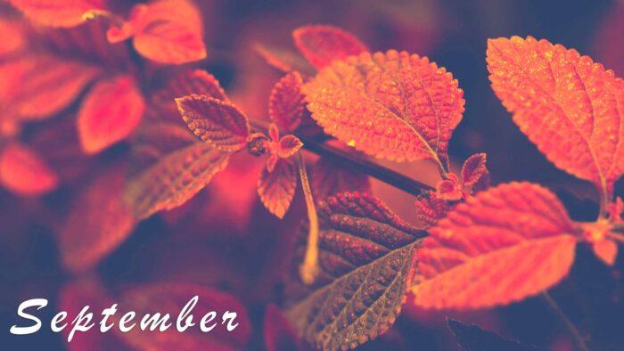 autumn september wallpaper images background