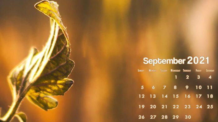 free september 2021 calendar wallpaper background desktop laptop computer